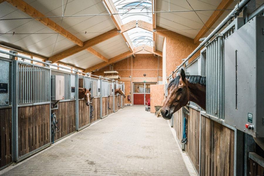 Hubertushof-Stall-09